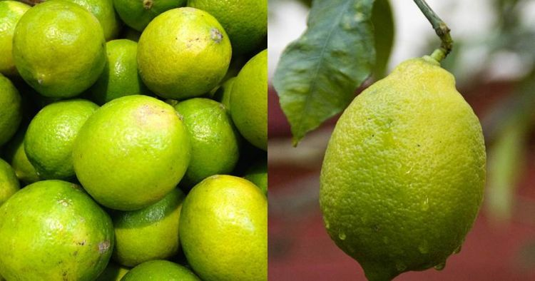 jeruk limau